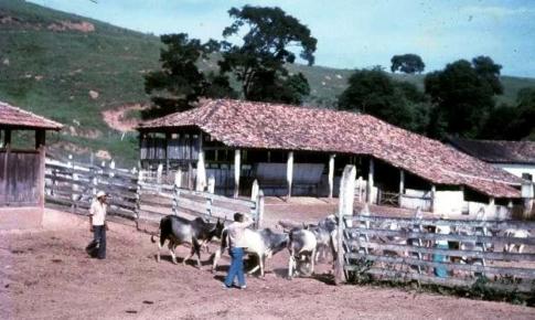 visitas a Fazenda Itaoca - RJ - compras iniciais de Guzerá (2)