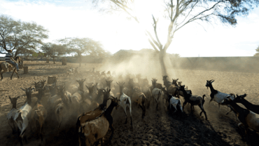 Fazenda Carnaúba