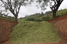 Ensilagem na Fazenda Carnaúba, Taperoá (PB)
